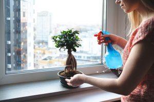 جا به جایی گل و گیاه در اسباب کشی