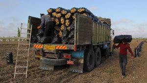 باربری و حمل بار محصولات کشاورزی